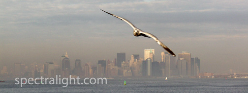 9/11 attack - seagull flies over New York Harbor